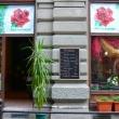 Rózsabokor Virág-Ajándék