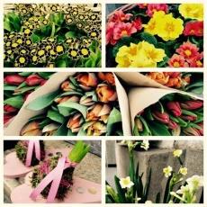 Bazsalikom Virágüzlet