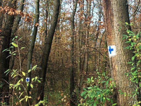 Kék kereszt - új turistajelzés a Budai-hegységben